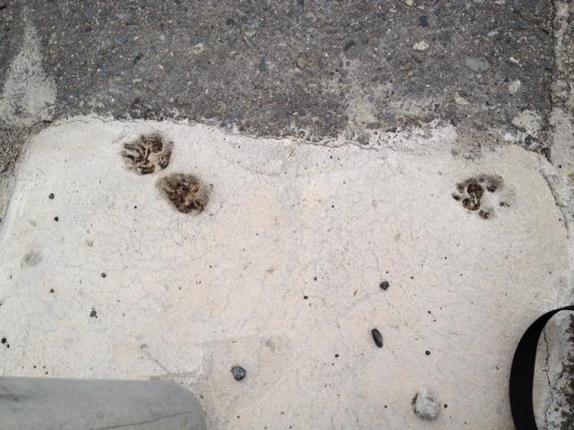 今日の遭遇猫(の足跡)