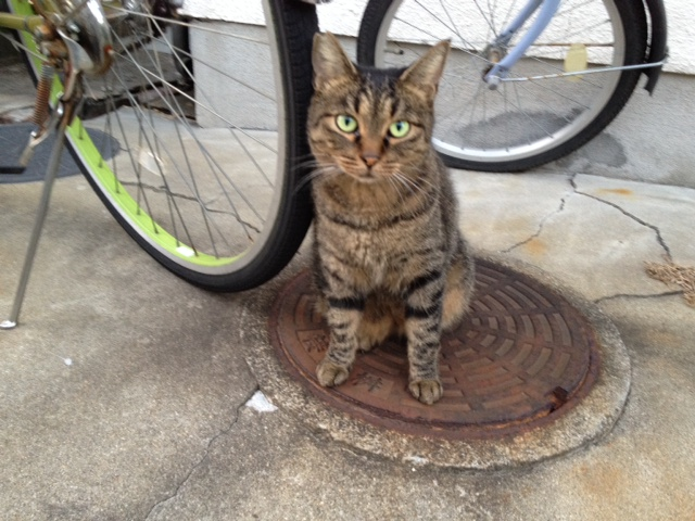 今日の遭遇猫その2