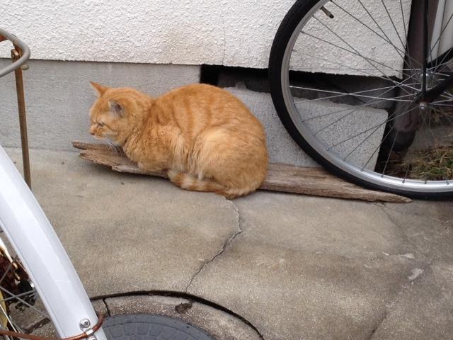 今日の遭遇猫