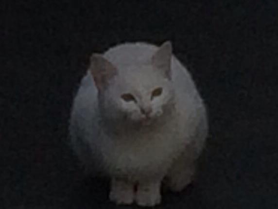 今日の遭遇猫その1